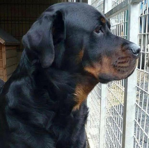 A woman saved her grandson after he was attacked by a rottweiler in Southend, police have said