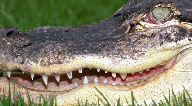 An alligator has attacked and severely injured a 90-year-old woman in south-west Florida