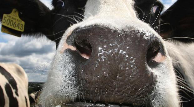 Lakeland collects milk from dairy farms across 15 counties, north and south