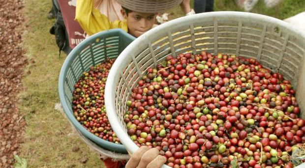 Nicaraguan workers wait in line to measure their coffee beans on a plantation on the slopes of the Poas Volcano, northwest of the capital of San Jose, Wednesday, Nov. 14, 2007. Costa Rica is hosting the International Coffee Week (SINTERCAFE) where hundreds of international representatives in the coffee industry discuss the trends including the emerging Asian market and Brazil's harvest. (AP Photo/Kent Gilbert)