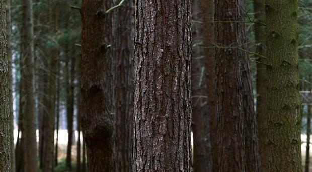Police in Germany are investigating a teenager who claims to have spent the past five years living in a forest