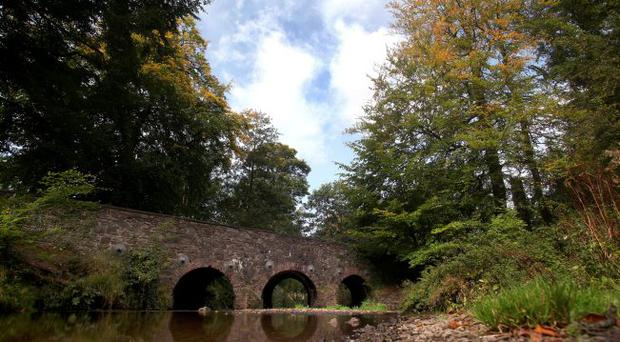 Minnowburn Beeches in south Belfast is magical place for Michael Longley