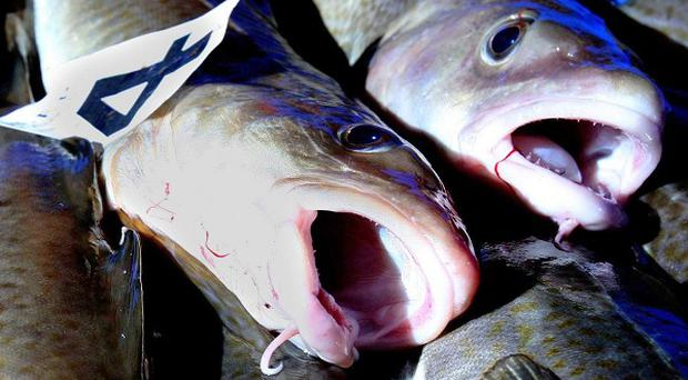 The European Commission has called for a halt to cod fishing in a bid to boost conservation