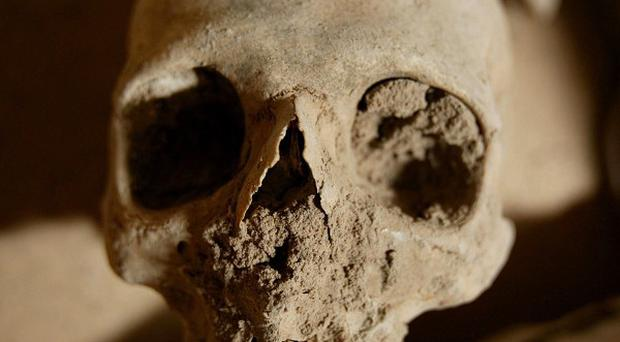 Human skeletal remains have been found on a building site in Ipswich
