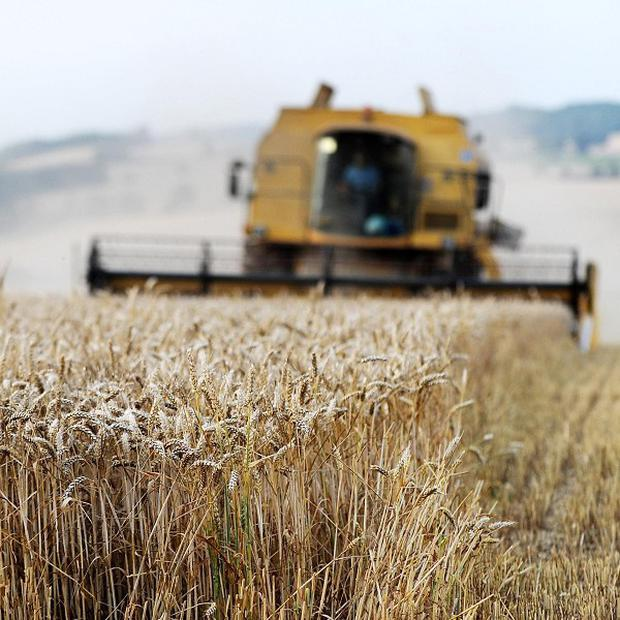 Subsidies to European farmers have an upper limit of 260,000 pounds a year