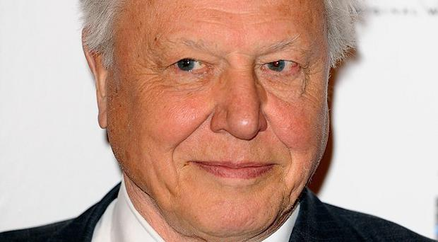 Sir David Attenborough thinks the natural world can help us handle grief