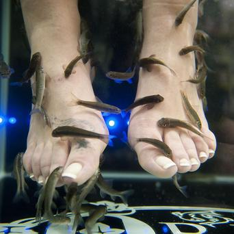 Questions have been raised over the beauty craze which sees customers place their feet in Garra Rufa fish tanks