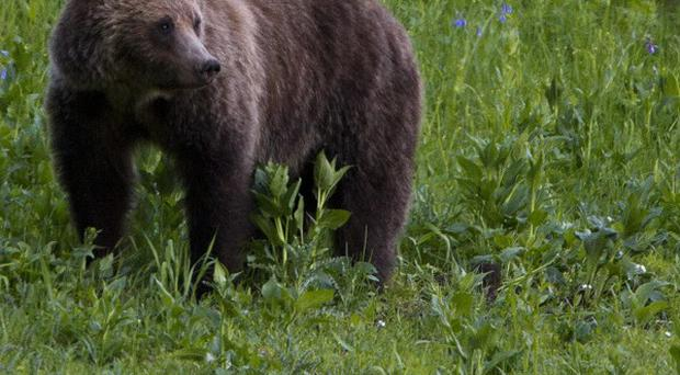 A US man has been killed after a hunter mistook him for a bear