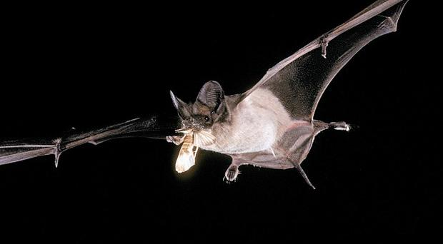 An survey has been launched to find out if bats are living in the UK's largest illegal travellers' site