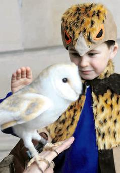 Eight-year-old Ben Kennedy with PK at the launch of the barn owl appeal by the Ulster Wildlife Trust