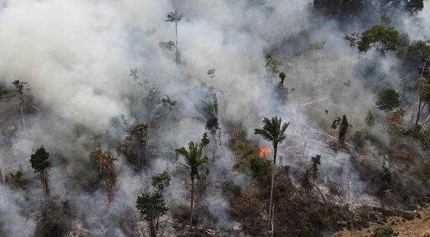 A forest in the Amazon is illegally burnt on the outskirts of Novo Progresso in the northern Brazilian state of Para (AP)