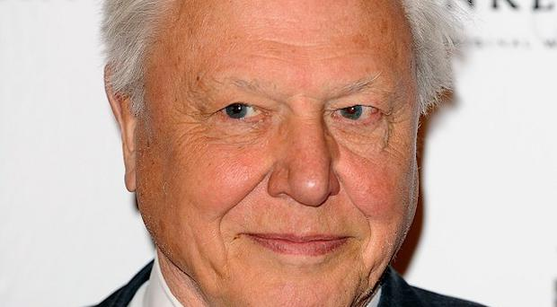 Sir David Attenborough has confessed that he prefers five-star surroundings to tents
