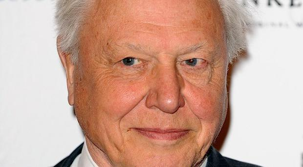 Sir David Attenborough has confessed he prefers five-star luxury to tents in remote places