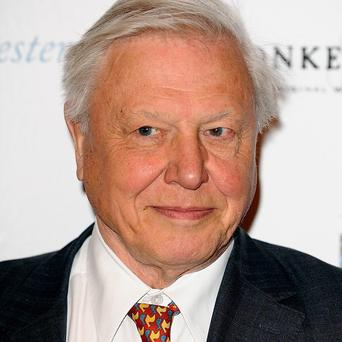 Sir David Attenborough narrates the BBC's Frozen Planet