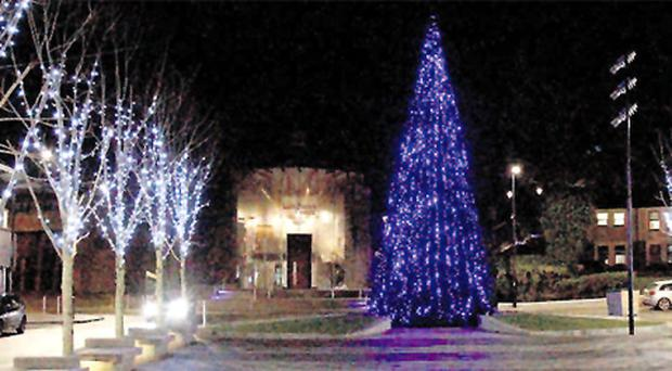 Branching out: Downpatrick's £17,500 tree
