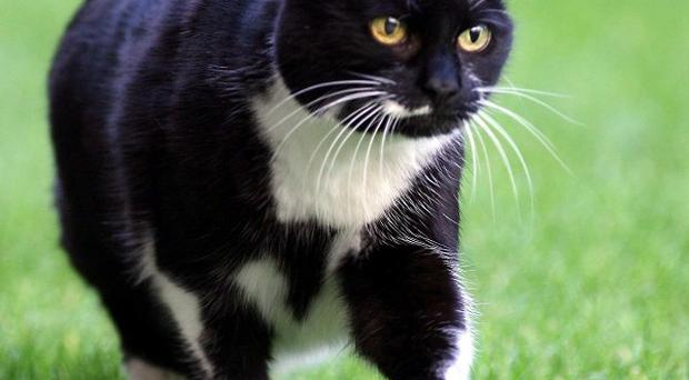 Anti-freeze poisoning is believed to be behind a spate of cat deaths
