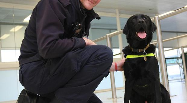 Labrador Retriever Buster with his handler Gavin Edwards at Gatwick Airport
