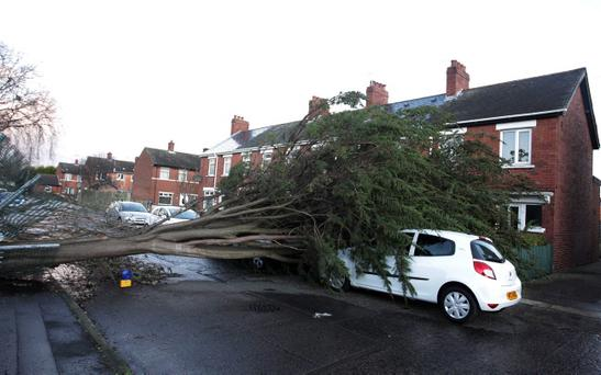 A tree on Sandbrook Park in east Belfast fell on two cars during gale force winds