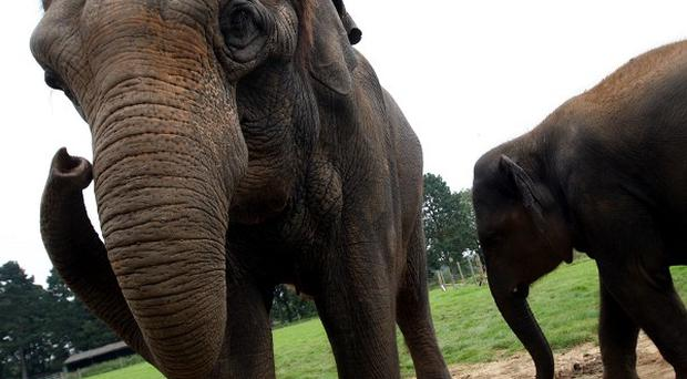 An elephant killed three villagers in an attack on the Nepalese-Indian border