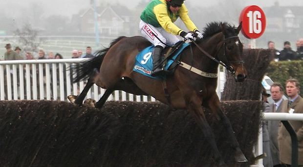 Sizing Europe beat Big Zeb comfortably in the 2011 Champion Chase