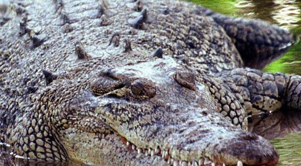 A crocodile has swallowed a girl in Indonesia as her father looked on helplessly