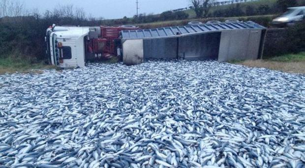 Farmer Gordon Flinn's field was covered in fish after a lorry carrying tonnes of mackerel was overturned