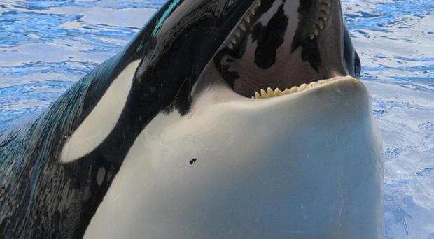 Five killer whales have been named as plaintiffs in the lawsuit filed by People for the Ethical Treatment of Animals