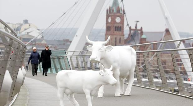 CowParade, the worlds largest public art exhibition. The life sized fibre glass cows will be painted and put on display throughout Northern Ireland during summer 2012. Some of the life sized cows on the Peace Bridge in Derry