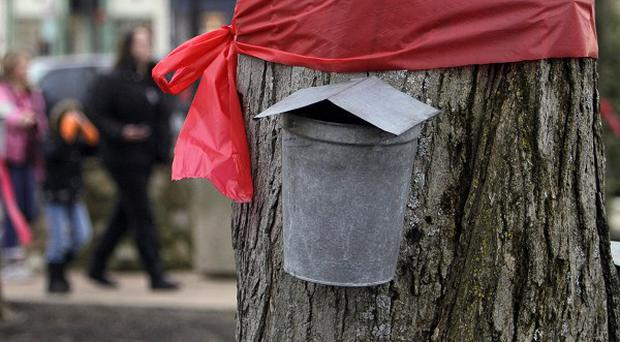 Red ribbons in remembrance of school shooting victims encircle a maple tree in Chardon, Ohio (AP)