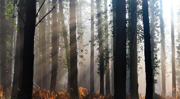 Campaigners warned hundreds of the UK's ancient woodlands are under threat