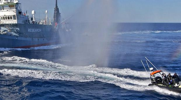Sea Shepherd Conservation activists on small boats attempt to slow down the Yushin Maru (Sea Shepherd)