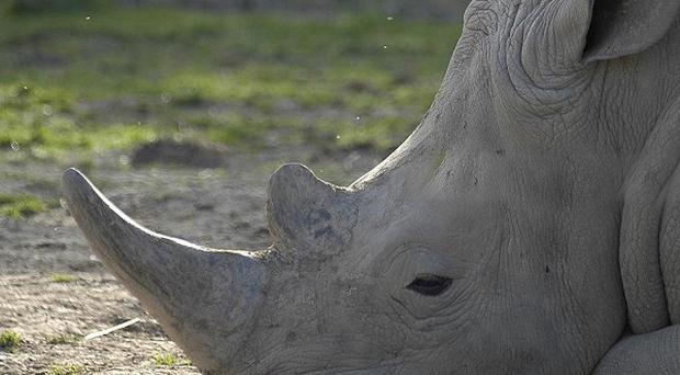 Rhino horns have been removed from the Natural History Museum over fears the exhibits will be stolen