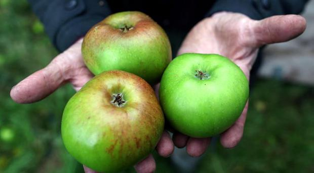 Core appeal: The Bramley apple