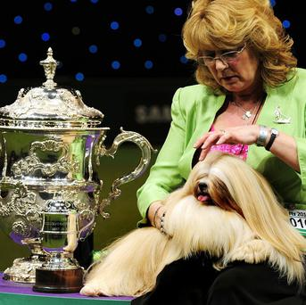 Elizabeth, a Lhasa Apso, winner of the Best in Show title, with owner Margaret Anderson, at Crufts