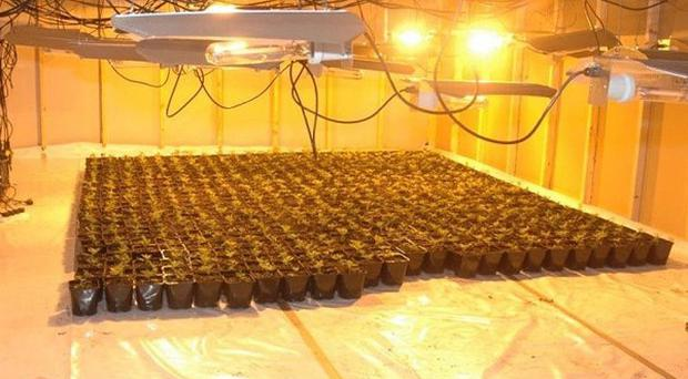 A cannabis factory found at a business premises at an industrial estate at Springfield, Youghal, Co Cork