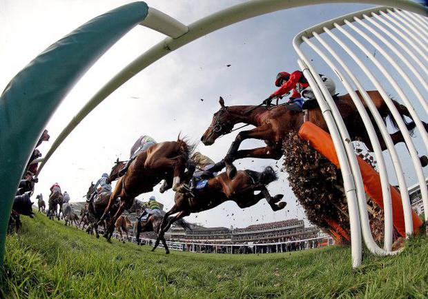 And they're off: Cheltenham Races