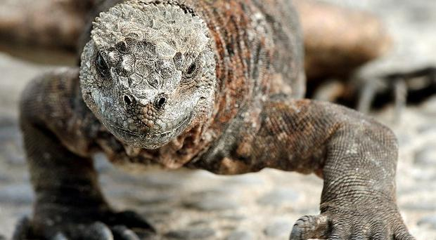 Police have seized five tons of iguana and pangolin carcasses, which are considered delicacies in China and Vietnam