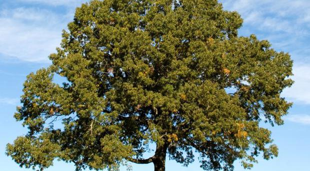 Trunk call: tree orders 'not being enforced'