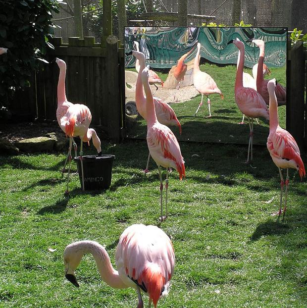 An East Sussex zoo is hoping romantic music puts its Chilean Flamingos in the mood for love