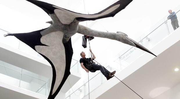 Giant: A flying dinosaur is hoisted into the atrium at the Ulster Museum
