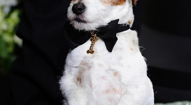 Uggie the dog from The Artist features in a new Peta campaign
