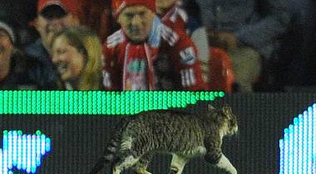 During a drab 0-0 draw between Liverpool and Tottenham in February, a cat entered the field of play.