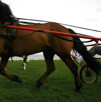 A Travellers representative group has urged members of the community to only take part in official sulky races
