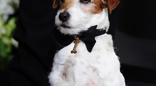 The Artist's Uggie won the top canine prize at Cannes last year