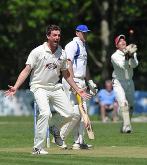 Waringstown's Chris Lyness celebrates taking the wicket of CIYMS's Jeremy Bray