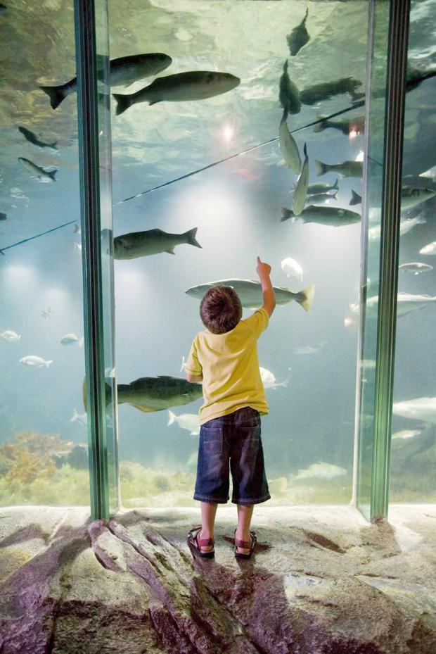 A young boy enjoys the underwater delights in Exploris