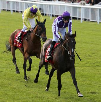 Camelot holds off Born To Sea in the Irish Derby