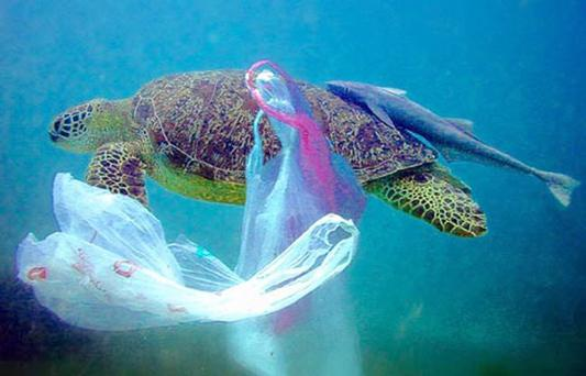 Turtles often confuse plastic bags with their main prey, jellyfish