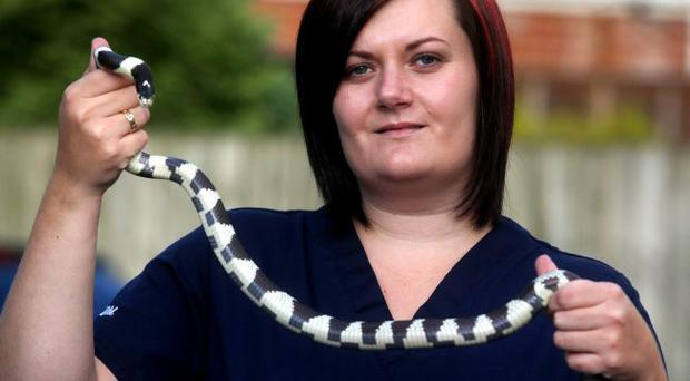 Victoria Cairnduff from the Earlswood Veterinary Hospital with the snake