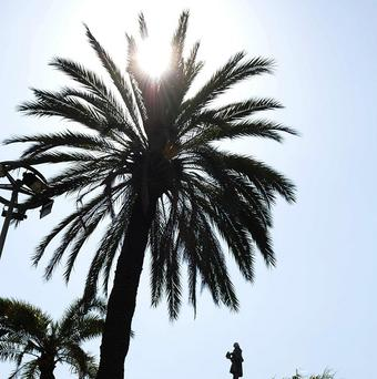 Palm trees swayed on the green shores of Antarctica 50 million years ago, a study has shown